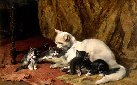 Cat with four boys on an old carpet.