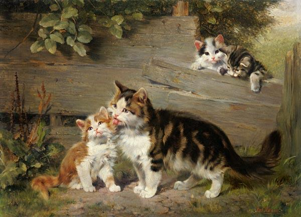 Cat mother with three boys