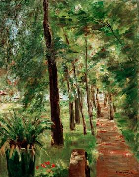 the birchavenue at the Wannsee-garden