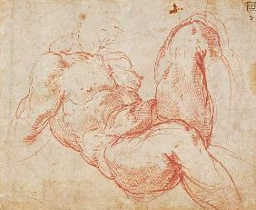 Study of a Nude (red chalk) Inv.1854/5/13/1 Recto (W.10)