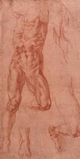 W.13r Study of a male nude, stretching upwards