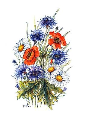 Cornflower, Poppy and Ox-eye Daisy (w/c on paper)