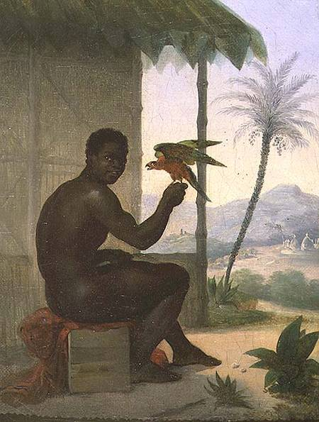[Immagine: brazilian_negro_tropical_bird_hi.jpg]