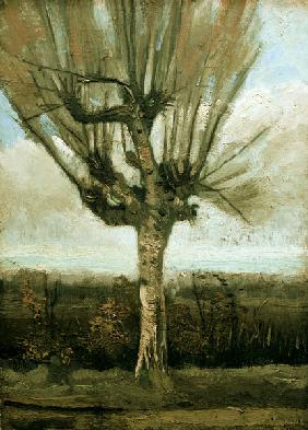 v.Gogh / Common white willow / 1884/85