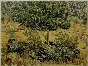 v.Gogh, Tree a.Bushes in Asylum Garden