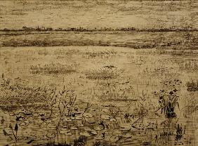 V.van Gogh, Marsh w.Water Lillies/ 1881