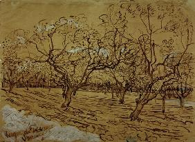 V.van Gogh, Orchard / Drawing / 1888