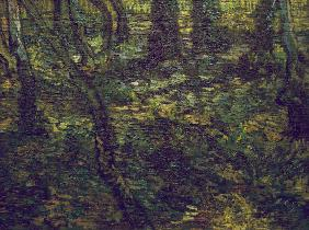 V.van Gogh, Undergrowth with Ivy / 1889