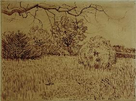 V.v.Gogh, Field w.Shrub / Drawing / 1888