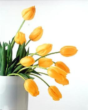 Yellow Tulips II, 1999 (colour photo)
