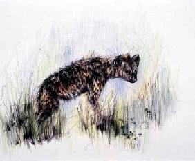 Baby Hyena, 1995 (pen, pencil and crayon on paper)