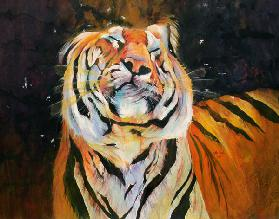 Tiger (Shaking Head) 1996 (inks, acrylics and pencil on paper)