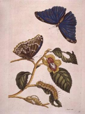 Butterflies and Caterpillars