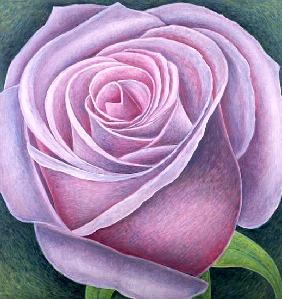 Big Rose, 2003 (oil on canvas)