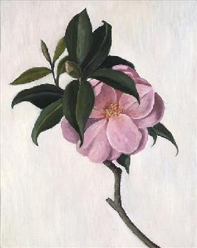 Camelia, 1998 (oil on canvas)