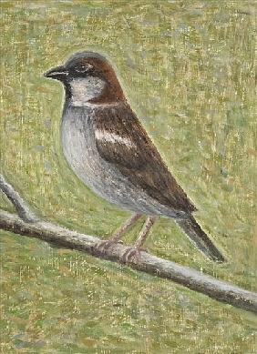 House Sparrow, 2008 (oil on wood)