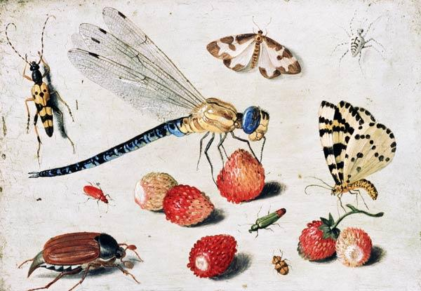 Study of Insects, Butterflies and Flowers