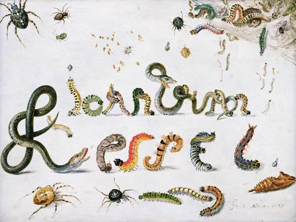 Garden and other spiders, caterpillars spell the artist''s name, 1657 (oil on copper)