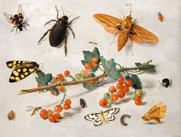 A sprig of redcurrants with an elephant hawk moth, a magpie moth and other insects, 1657 (oil on cop