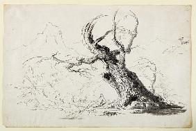 Large Gnarled Tree with Bearded Man Seated Below