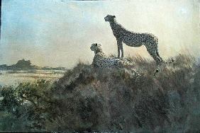 Cheetah, Serengeti (oil on board)