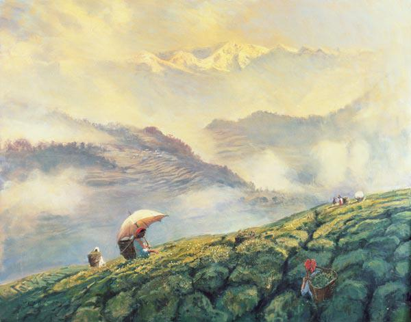 Tea Picking, Darjeeling, India, 1999 (oil on canvas)