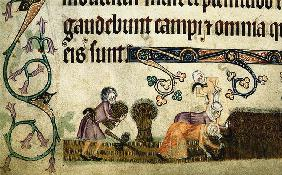 Reaping and binding sheaves (From the Luttrell Psalter)
