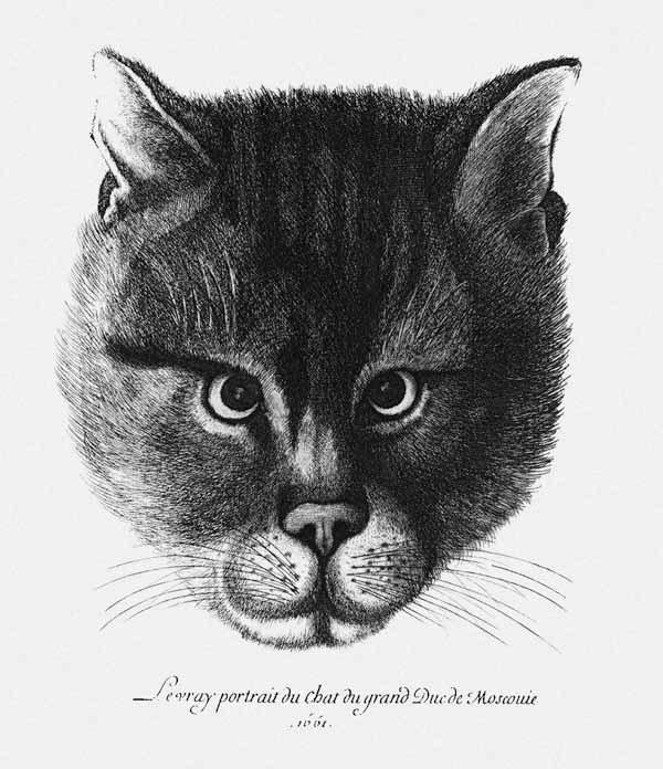 True picture of the Cat of the Tsar Alexis I Mikhailovich of Russia